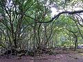 Trees in Big Wood, Arne - geograph.org.uk - 1772396.jpg