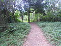 Trindade - trilha (3).jpg