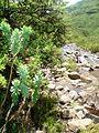 Ts'ehlanyane Nature Reserve - panoramio.jpg