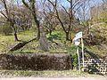 Tsuzuraori, Tsubata, Kahoku District, Ishikawa Prefecture 929-0412, Japan - panoramio (1).jpg