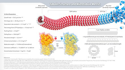 Tubulin and Microtubule Metrics Infographic