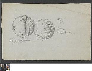 Twee appelen