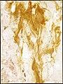 Tylicki Natural Art 382.jpg