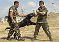 US Navy 040518-N-8977L-008 Master-at-Arms 2nd Class Jaime Perez, of Los Angeles, Calif., holds Military Working Dog (MWD) Barry, a three-year-old Belgian Malinois.jpg
