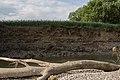 Ufer Abbruch mit Nisthöhlen.jpg