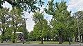 Ulmen sachsenplatz dresden 2019-05-07 -5.jpg