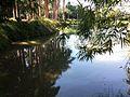 Uma perspectiva das diferentes margens do lago do parque do Inhotim.jpg