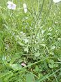 Unknown flower onex base.jpg