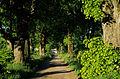 Vår i den gamle lindealleen mellom Kubberød og Bergersborg.jpg