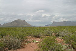 Chihuahuan Desert Wikipedia