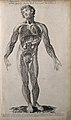Vessels and glands of the lymphatic system; male figure seen Wellcome V0007988.jpg