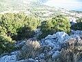 Vižanica-šuma na istočnoj padini 1209.jpg