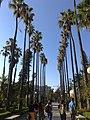 Villa giulia palme.jpg
