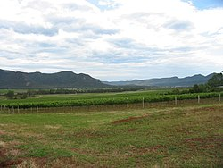 Vineyards in BrokeFordwich Wine District.jpg