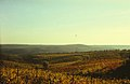 Vineyards of Moldova (1985). (27367336210).jpg