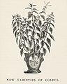 Vintage illustrations by Benjamin Fawcett for Shirley Hibberd digitally enhanced by rawpixel 95.jpg