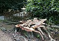 Voorbeeld van onderhoud op de begraafplaats- een stam van een omgekapte boom - Utrecht - 20413241 - RCE.jpg