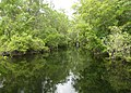 Wakulla-springs 2009-05-04T19 38 27.jpg