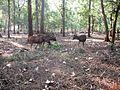 Walayar Deer Park - panoramio (8).jpg