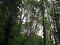 Wald im Wolfstalflur Tauberbischofsheim 06.jpg
