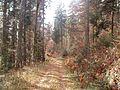 Wanderung im November - panoramio (45).jpg