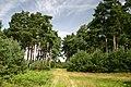 Wangford Woods - geograph.org.uk - 514484.jpg