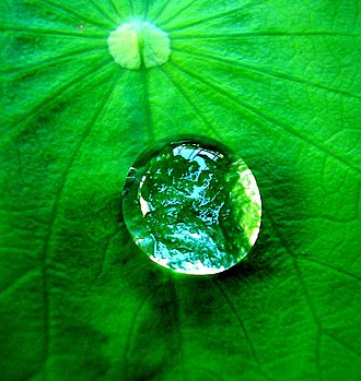 Hydrophobic effect - A droplet of water forms a spherical shape, minimizing contact with the hydrophobic leaf.