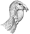 Wattle (PSF).png