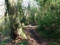 Wayfarer's Walk Hambledon - geograph.org.uk - 1268257.jpg