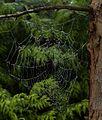 Web IMG 6971.jpg - panoramio.jpg
