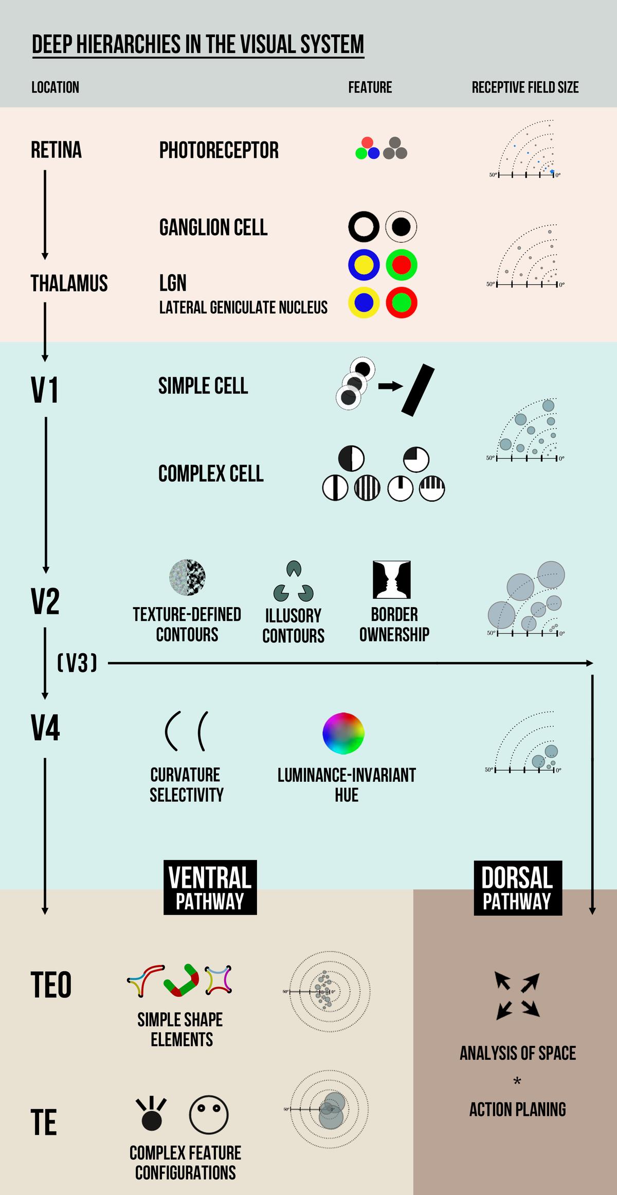 Visual hierarchy - Wikipedia