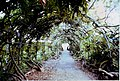 Wisteria arch in the Pleasure Ground, St Thomas, Exeter - geograph.org.uk - 1534249.jpg