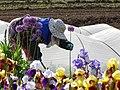 Woman in Field with Flowers - Furano - Hokkaido - Japan (48012215176).jpg