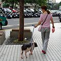 Woman walking pig, October 2008 (cropped).jpg