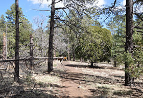 Woodchute Wilderness Trail 102.jpg