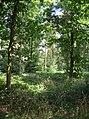 Woodland at The Haddocks - geograph.org.uk - 525751.jpg