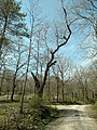 Yellow Creek State park spring 2016 - panoramio (12).jpg