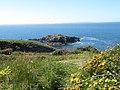Ynys Penpleidian (island), Bae Caerfai bay, S of Tydddewi (St David's), Sir Benfro (Pembrokeshire), Cymru (Wales) 01.jpg