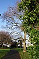 Young's Park, Paignton Footpath and trees - geograph.org.uk - 645924.jpg