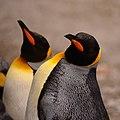Zürich Zoo DSC 5802 2 (12877718373).jpg