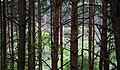 Załęczański Park Krajobrazowy dolina Warty zza drzew 01.05.2011 p.jpg