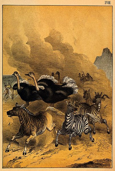 File:Zebras and ostriches are being chased by cowboys,leaving a l Wellcome V0021369.jpg