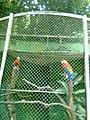 Zoo Dois Irmãos by SandraSB (7).jpg