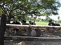Zoologico Hacienda Maria Claridad - Santiago de los Caballeros, Republica Dominicana - panoramio.jpg