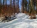 Zuerichberg Winter.jpg