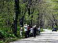 'Birders' at Point Pelee (4576399218).jpg
