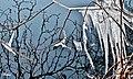 Γλυπτά από πάγο...στην λίμνη της Καστοριάς.jpg