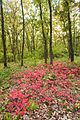 Агармишський ліс.JPG