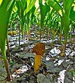 Весна. Первый гриб. Spring. First mushroom. - panoramio.jpg