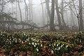 Весна на Аю-Даге.jpg